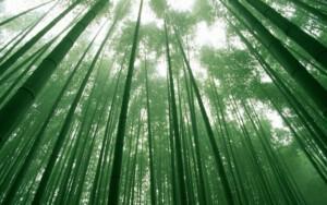 chinese_bamboo
