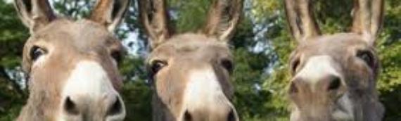 Be A Donkey